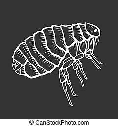 Flea insect parasite engraving vector illustration. Scratch...