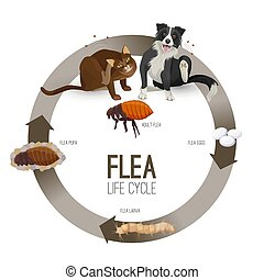 Flea life cycle circle vector. Pets with harmful parasites suffering from it. Dog and cat scratching, eggs and larvae transforming pupa becoming adult