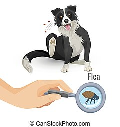 Flea poster with scratching dog and insect vector illustration