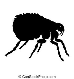 Flea silhouette isolated on white background.