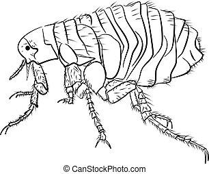 Flea vector illustration