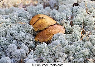 flechte, pilze, wachsen