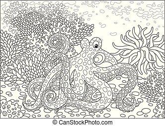 fleckig, oktopus