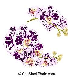 fleckig, tropischer betrieb, satz, zweige, vector.eps, vier, orchideen