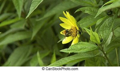fleur, abeille, vue, côté