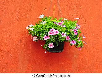 Mur Pots Fleur Fond Pendre