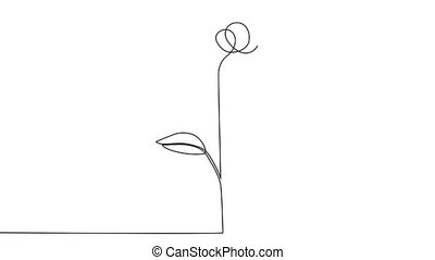 fleur, animation, main, image, une, continu, dessin, ligne, soi, rose unique, silhouette., dessiné