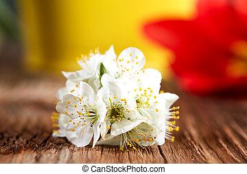 fleur apple, tulipe, blanc, fleur, rouges