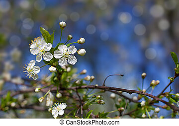 fleur, arbre, pomme