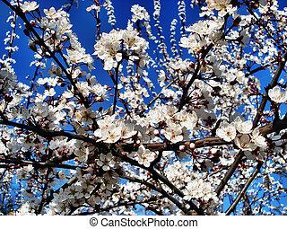 fleur, arbres