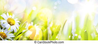 fleur,  art, résumé, ensoleillé, fond,  springr