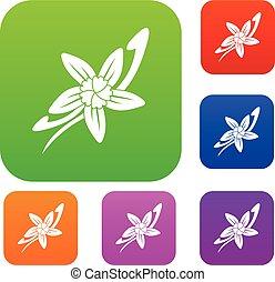 fleur, bâtons, couleur, vanille, collection, ensemble