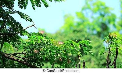 fleur, barbouillage, arbres, fond