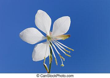 fleur, blanc