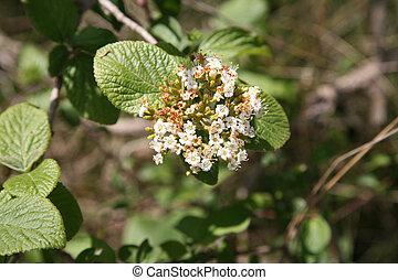 fleur blanche, arbre