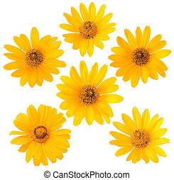 fleur blanche, fond jaune