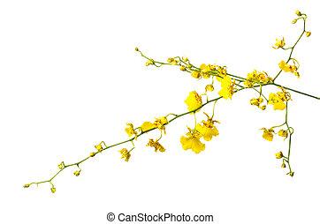 fleur blanche, isolé, jaune, orchidée