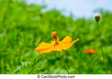 fleur bleue, arrière-plan vert, jaune