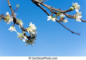 fleur bleue, ciel, fond, arbre