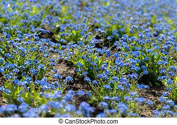 fleur bleue, fleurs, jardin, croissant