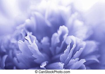 fleur bleue, pivoine, résumé, -, fond