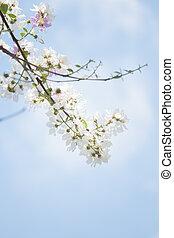 fleur bleue, printemps, arbre, fond, fleurs, ciel
