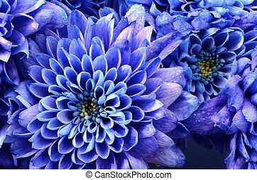 fleur bleue, texture, détails, fond, ou