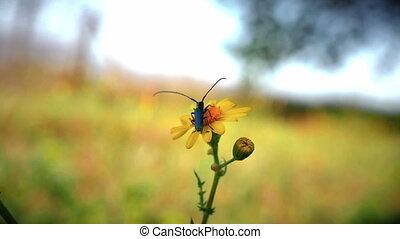 fleur, bogue, jaune