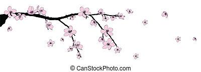 fleur, branche, cerise, beau