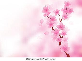 fleur, branche, cerise