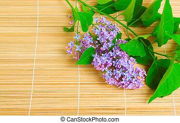fleur, branche, lilas
