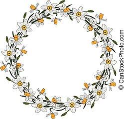 fleur, cadre, wreath., narcisse, vecteur, cartes, design.