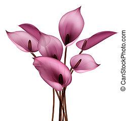 fleur, calla