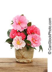 fleur, camélia, arrangement