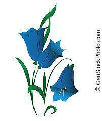 fleur, campanule