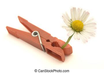 fleur, capturé