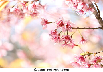 fleur, cerise, fleurs, sakura