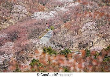 fleur, cerise, paysage