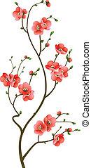 fleur, cerise, résumé, branche, fond