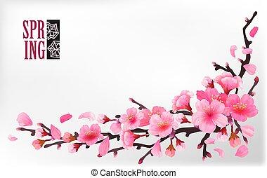 fleur, cerise, sakura, branche, ou
