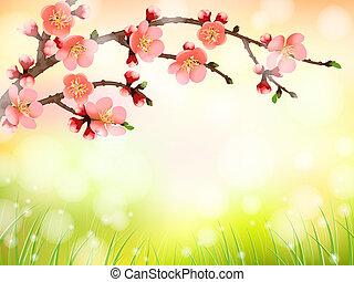 fleur, cerise, sakura, lumière, matin