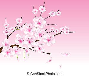 fleur, cerise, vecteur, branche