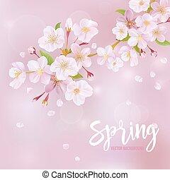 fleur, cerise, -, vecteur, fond, printemps