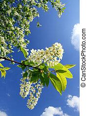 fleur, cerisier, oiseau, branche