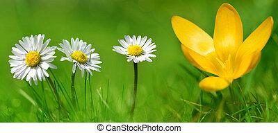 fleur, colchique, herbe, pâquerette