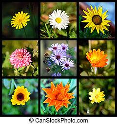 fleur, collage