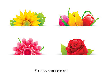 fleur, coloré