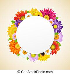 fleur, coloré, gerbers