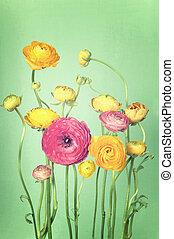 fleur, coloré, vendange, arrangement, ranunculus, fond