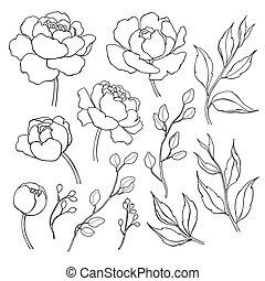 fleur, contour, pivoine, drawing., feuilles, main, vecteur, dessiné, ligne